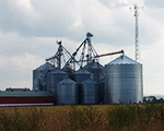 Hallview Farms Inc